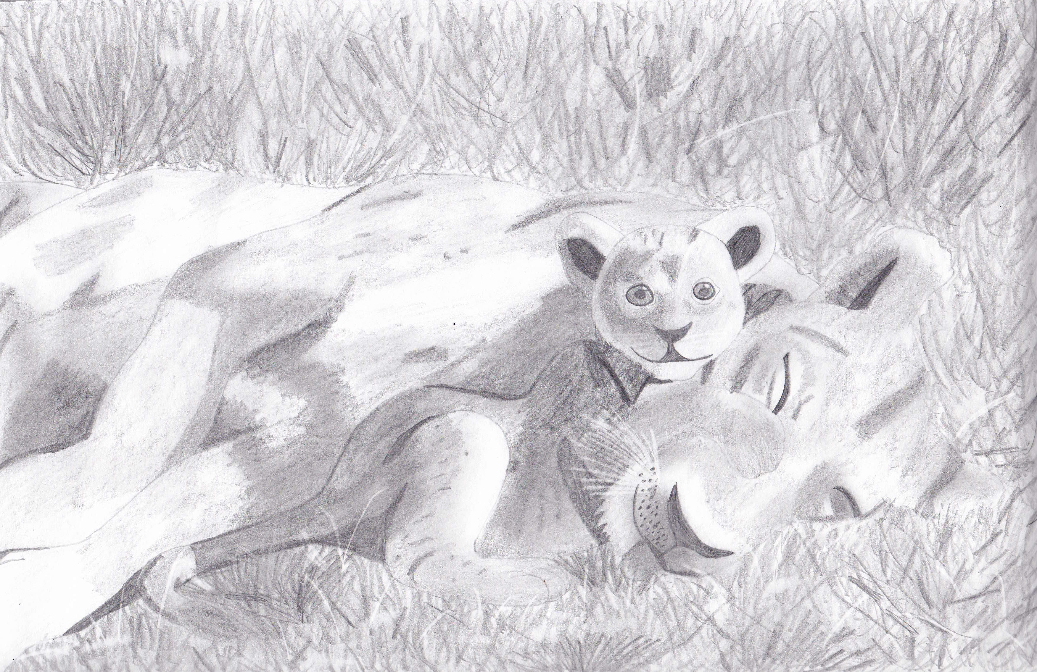 Lion Life Drawing Sketch